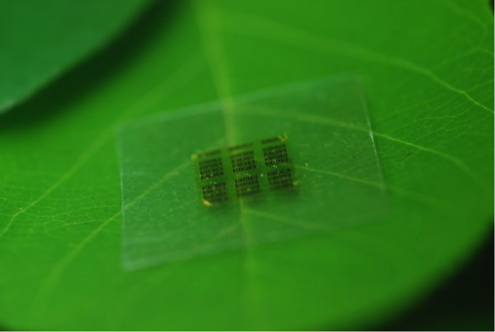 Biodegradable Microchips will become the norm. Image: Newstack
